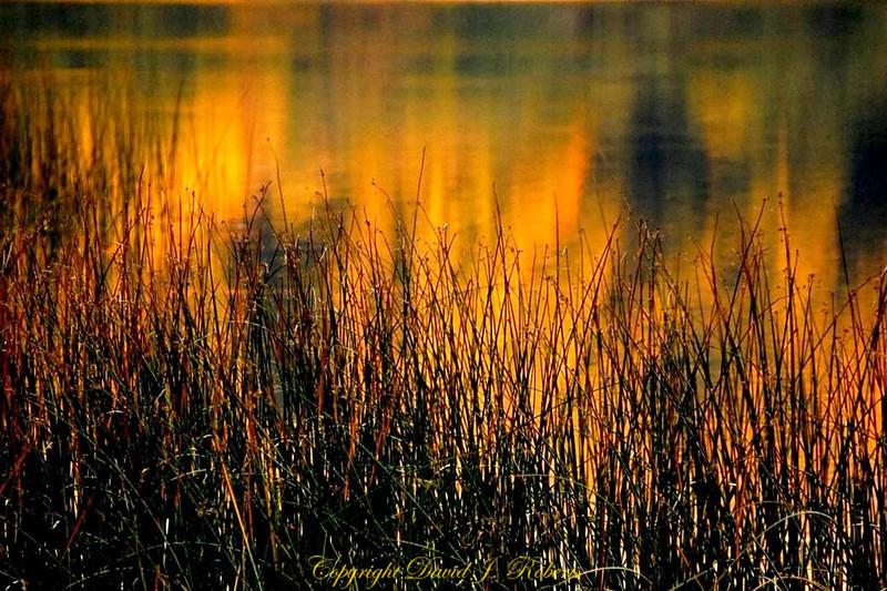 Fall light on water with bullrush, Lake Padden, Bellingham WA