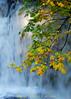 Whatcom Creek upper falls with maples, Bellingham WA