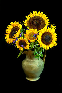 Sunflowers in a picher