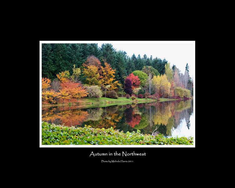 Ready to frame.  All you need is an 16x20 inch frame and you are all set!<br /> <br /> Photo was taken on the Weyerhaeuser campus in Federal Way Washington - Fall 2011