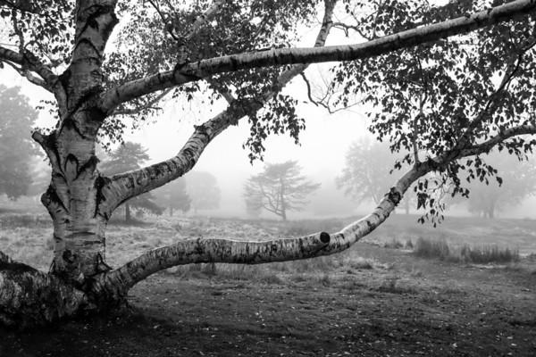 Stretching Through the Fog
