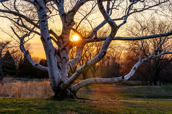 Sunset through the Branches