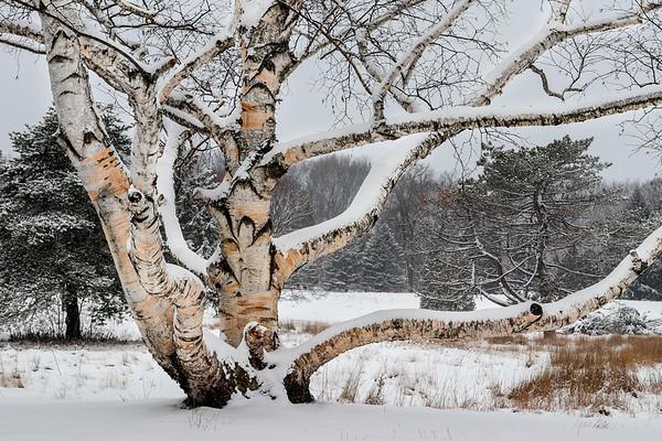 Michigan Welcomes Winter