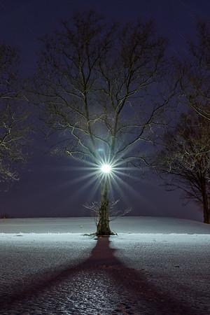 A Tree's Inner Light