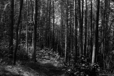 Darkend Forest