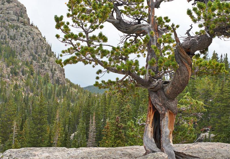 Colorado  _DSF0964 Aug 22 2013