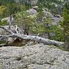 Colorado  _DSF0963 Aug 22 2013
