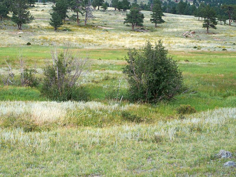 Colorado  _DSF1140 Aug 24 2013