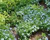 spring at NY Botanical Garden_DSF3188