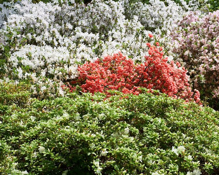 spring at NY Botanical Garden_DSF3185