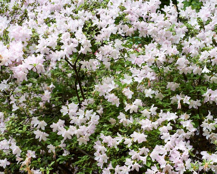 spring at NY Botanical Garden_DSF3187