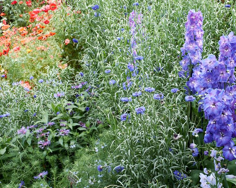 spring at NY Botanical Garden_DSF3156