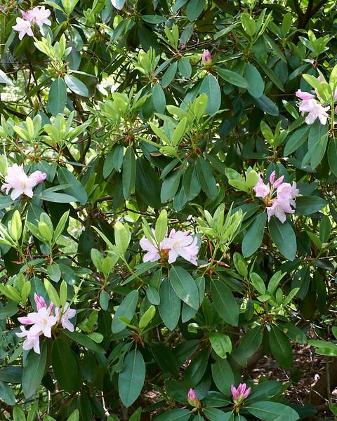 spring at NY Botanical Garden_DSF3158