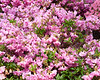 spring at NY Botanical Garden_DSF3183