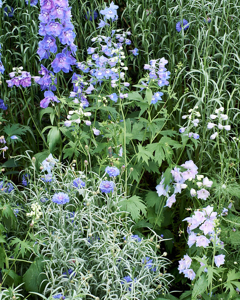 spring at NY Botanical Garden_DSF3153