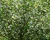 spring at NY Botanical Garden_DSF3192