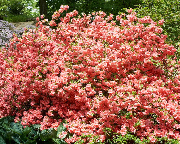 spring at NY Botanical Garden_DSF3186