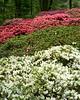 spring at NY Botanical Garden_DSF3184