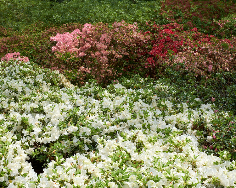 spring at NY Botanical Garden_DSF3182