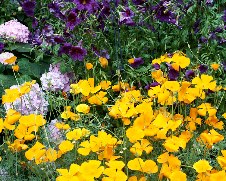 spring at NY Botanical Garden_DSF3144
