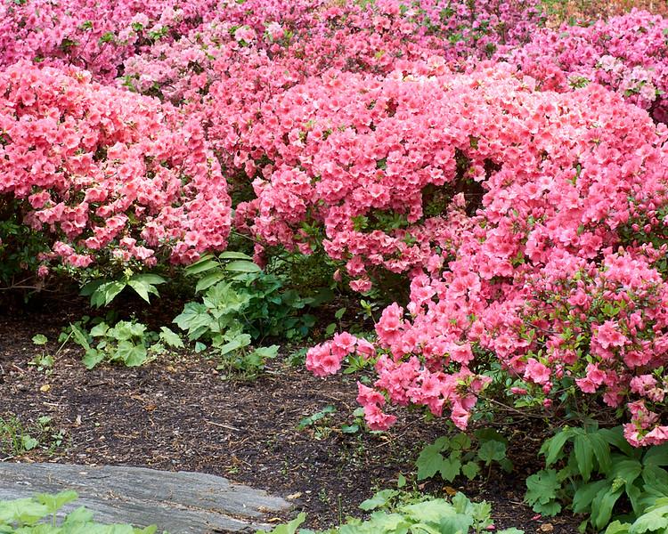 spring at NY Botanical Garden_DSF3180
