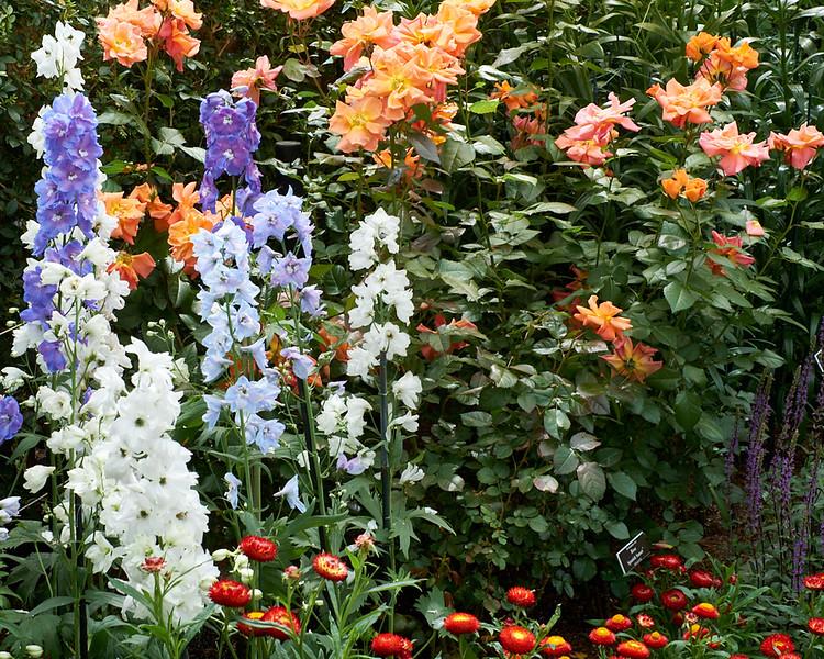 spring at NY Botanical Garden_DSF3149