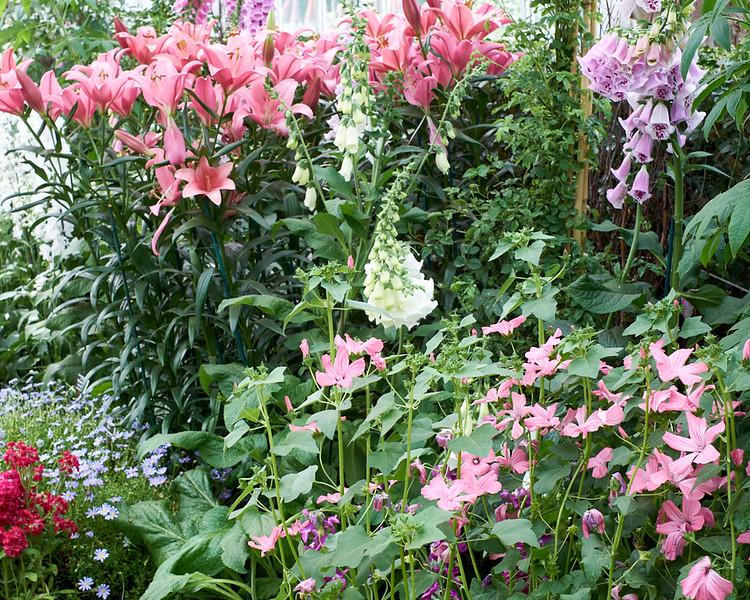spring at NY Botanical Garden_DSF3147