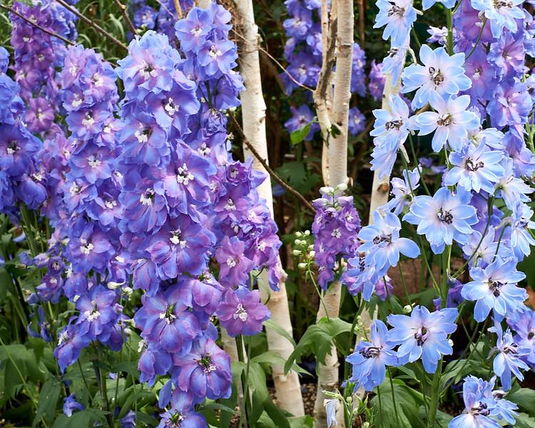 spring at NY Botanical Garden_DSF3154