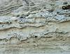 Fossil hillside, Peninsula Valdes, Argentina 3/2010