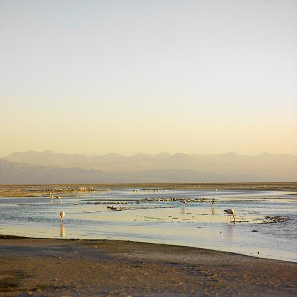 Flamingoes, salar (salt lake), Atacama Desert, Chile, November, 2007