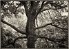 Trees - voice 2CF018305