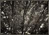 Trees - voice 2CF018297