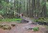 Ben A'an - Forest Walk