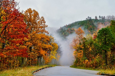 Fog Ahead