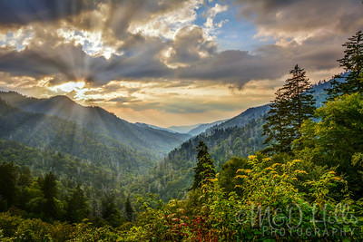 "The ""Heart"" Of The Smokies"