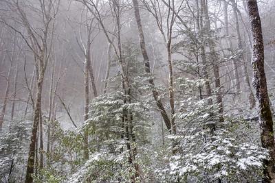 A Dash Of Winter