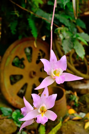 Orchids and gears