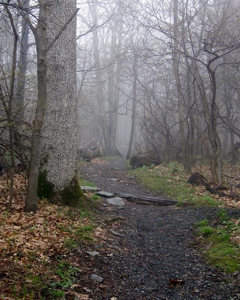 Path to Betty's Rock<br /> <br /> May 5, 2007<br /> <br /> Shenandoah National Park, VA