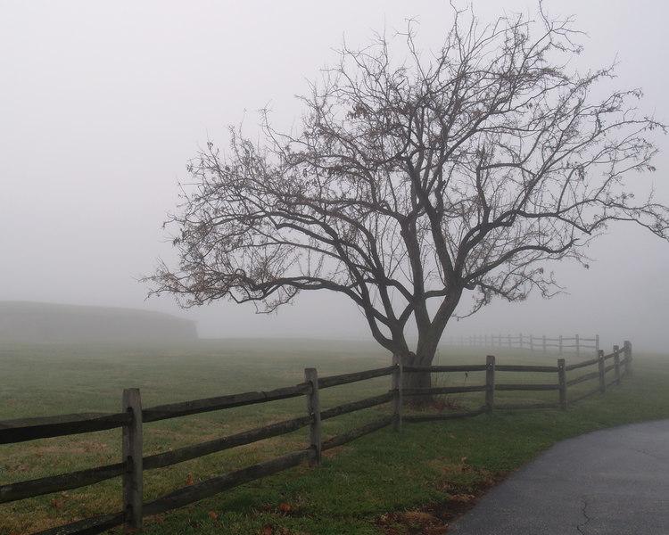 Fenced In<br /> <br /> December 14, 2006<br /> <br /> Baltimore, MD