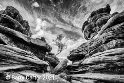 Brimham Rocks Tree Out of Stone