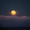 Full Wolf Moon Rising
