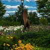 UVM Gardens
