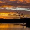 Osprey At Sunset