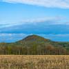Corn Stalks and Cobble Hill
