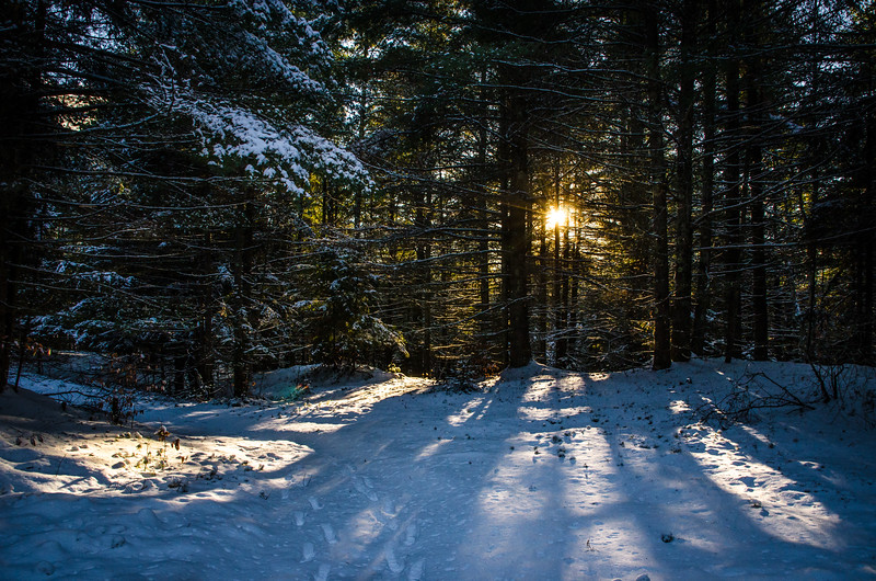 Sun Goes Down In The Forest
