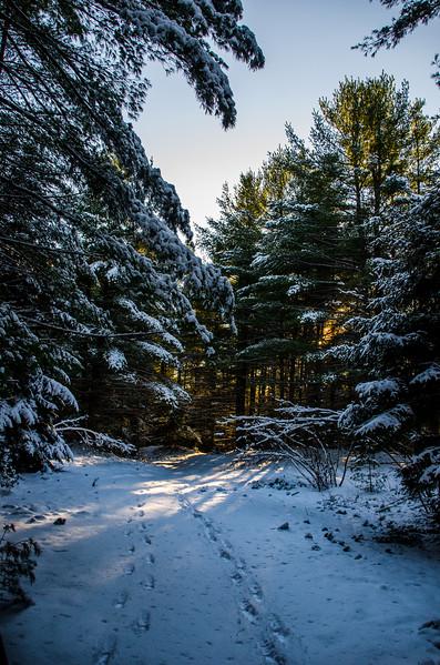 Snowshoeing In Westford