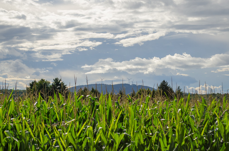 Georgia Mountain Through The Corn