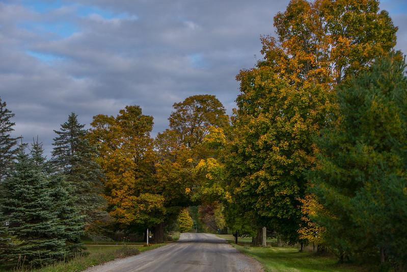 Plains Road Tree Arch