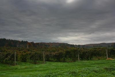 Boyden Valley Winery Grape Vines in Cambridge, VT