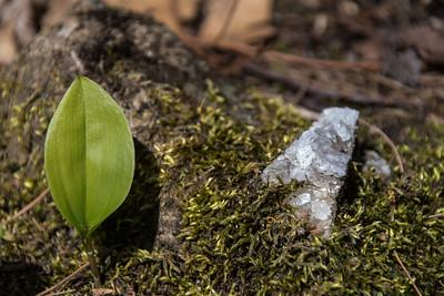 Spring Leaf And Quartz